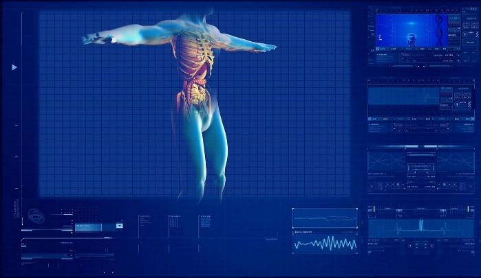 Human digestive system simulation