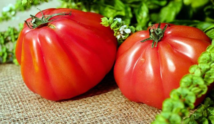 Tomato, Probiotics, Non-Sterile Soil