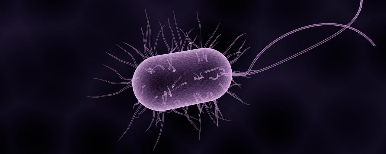 Ammonia Oxidising Bacteria: A Live Topical Therapeutic