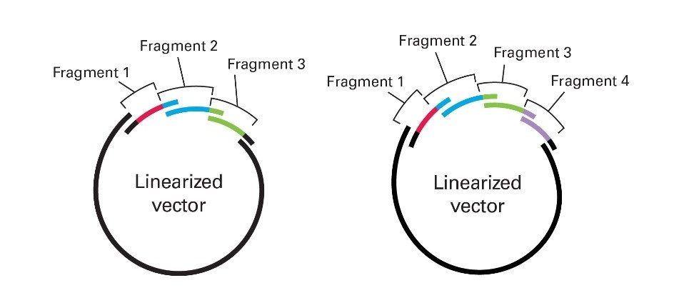 synthetic-biology-cloning-gene-fragments