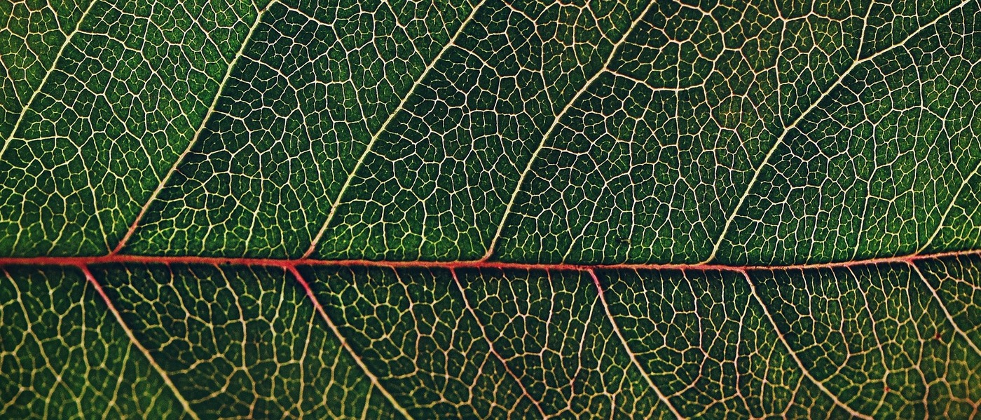 Novel Photosynthesis Technology - the Solution to the Global Food Security Crisis