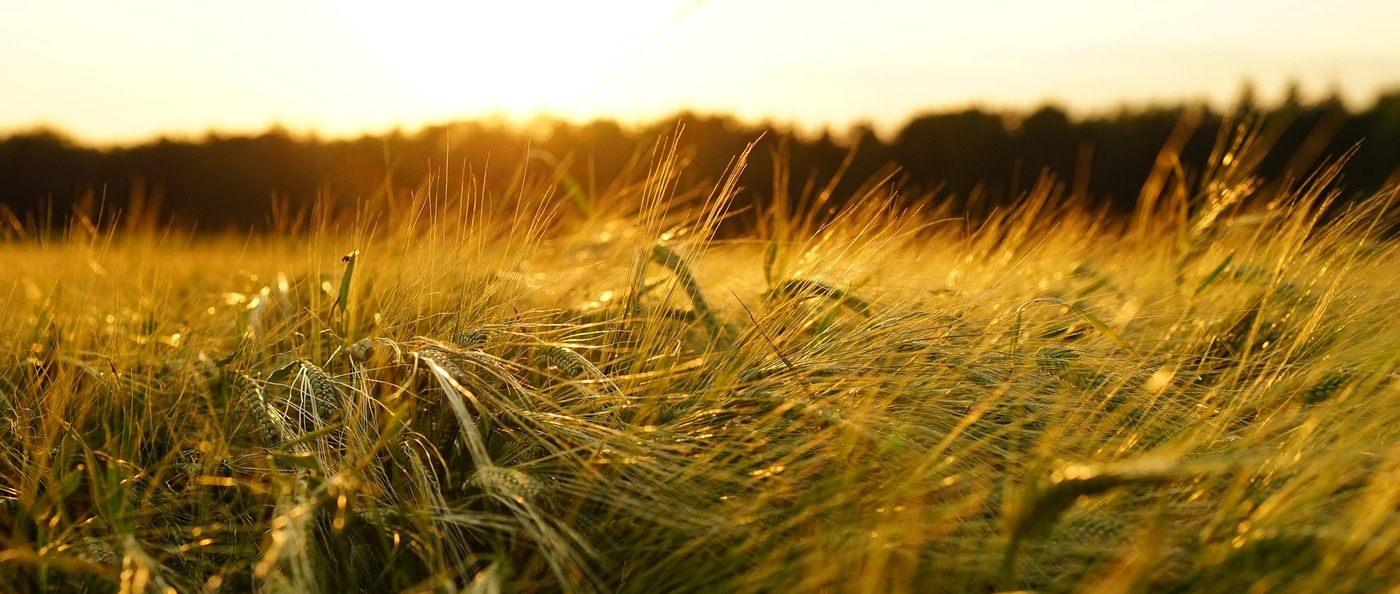 Unravelling the Regulatory Quagmire of Agrobiologicals